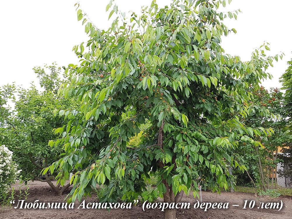 Lubimitca_Astahova_10